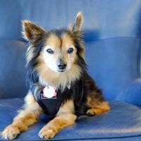 Adopt A Pet :: Dallas - San Francisco, CA