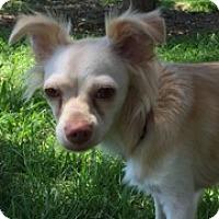 Adopt A Pet :: BECK - Elk Grove, CA
