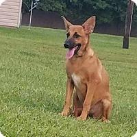 Adopt A Pet :: Cookie - Harmony, Glocester, RI