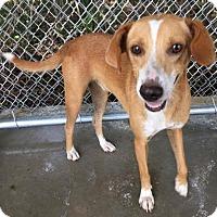 Adopt A Pet :: Jenny - Claxton, GA
