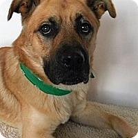 Adopt A Pet :: Ben - Monteregie, QC