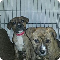 Adopt A Pet :: Craig - Silver Lake, WI