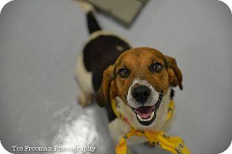 Beagle Mix Dog for adoption in Muldrow, Oklahoma - Tucker
