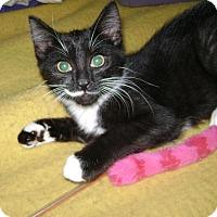 Adopt A Pet :: Chloe b. - Norwich, NY
