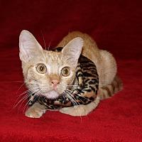 Adopt A Pet :: Gizmo - Jackson, MS