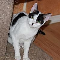 Adopt A Pet :: Fancy - Mesa, AZ