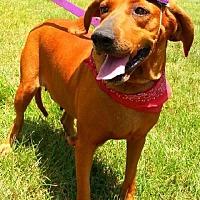 Adopt A Pet :: Cher - Simsbury, CT