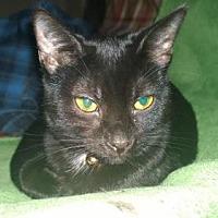 Adopt A Pet :: Wynonna - Columbus, OH