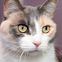 Adopt A Pet :: MAYLA - IN FOSTER - Royal Oak, MI