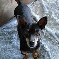 Adopt A Pet :: Tango - Richmond, CA
