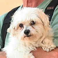 Adopt A Pet :: Edwina - Palmdale, CA