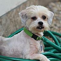 Adopt A Pet :: Royce Montgomery - Urbana, OH