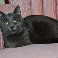Adopt A Pet :: Travis - Buford, GA