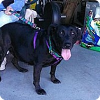 Adopt A Pet :: Angel - PENDING - kennebunkport, ME