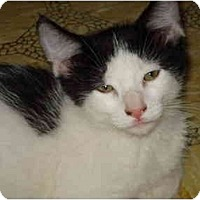 Adopt A Pet :: Stan - Davis, CA