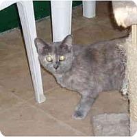 Adopt A Pet :: Grace - Hamburg, NY