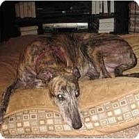 Adopt A Pet :: Trey (Trey Pazzo) - Louisville, KY