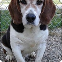 Adopt A Pet :: Ripley-ADOPTED - Indianapolis, IN