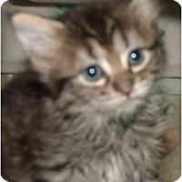 Adopt A Pet :: 1 Baby - Dallas, TX
