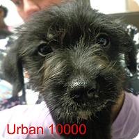 Adopt A Pet :: Urban - Greencastle, NC