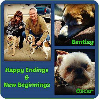 Brussels Griffon/Beagle Mix Dog for adoption in Austin, Texas - OSCAR & BENTLEY: Adopted