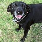 Adopt A Pet :: Maggie - Denton, TX
