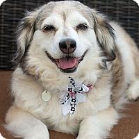 Adopt A Pet :: Bisquit - West Richland, WA
