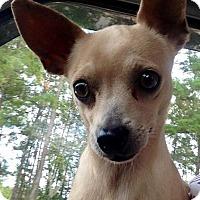 Adopt A Pet :: Tulip - Gainesville, FL