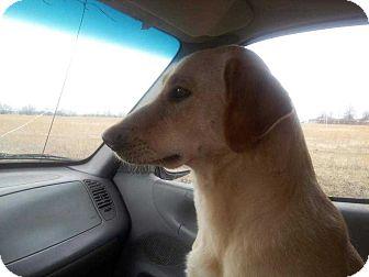 Labrador Retriever Dog for adoption in Disney, Oklahoma - Lola