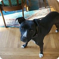 Adopt A Pet :: Molly - Yuba City, CA
