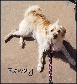 Terrier (Unknown Type, Small) Mix Dog for adoption in Upland, California - Rowdy