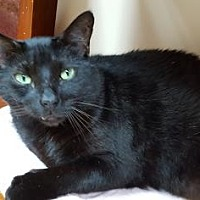 Adopt A Pet :: Blackie - Pompano Beach, FL