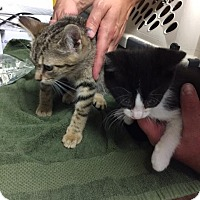 Adopt A Pet :: Julienne and Zorro - Windsor, CT