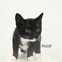 Adopt A Pet :: Greg - Balto, MD
