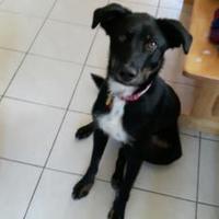 Adopt A Pet :: Riley - Spruce Grove, AB