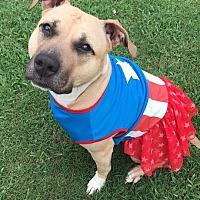 Adopt A Pet :: Callisto - Durham, NC
