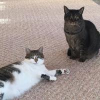 Adopt A Pet :: Stacey - Elkhorn, WI