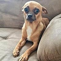 Adopt A Pet :: Mickey - Chandler, AZ