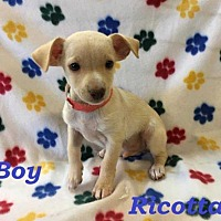 Adopt A Pet :: Ricotta - sylmar, CA