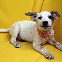 Adopt A Pet :: Egon - Westminster, CO