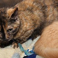 Adopt A Pet :: Ygritte - Marietta, OH