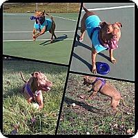 Adopt A Pet :: Sandy - Clarksburg, MD