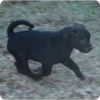Adopt A Pet :: Romo - Arlington, TX