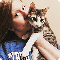 Adopt A Pet :: Dread Pirate grey & white - McDonough, GA