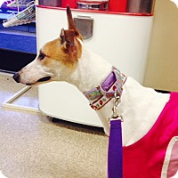 Adopt A Pet :: Chim Chim - Lexington, SC