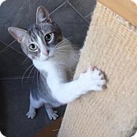 Adopt A Pet :: Simon - Seguin, TX