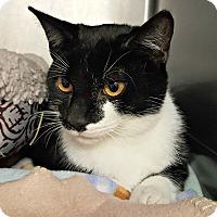 Adopt A Pet :: Elvis - Chesapeake, VA