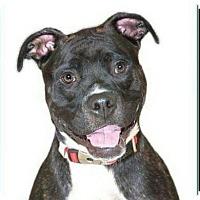 Adopt A Pet :: Brickle - Rockville, MD