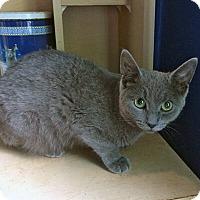 Adopt A Pet :: Raine - Mississauga, Ontario, ON