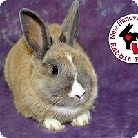 Adopt A Pet :: Bunnz - Wilmington, NC